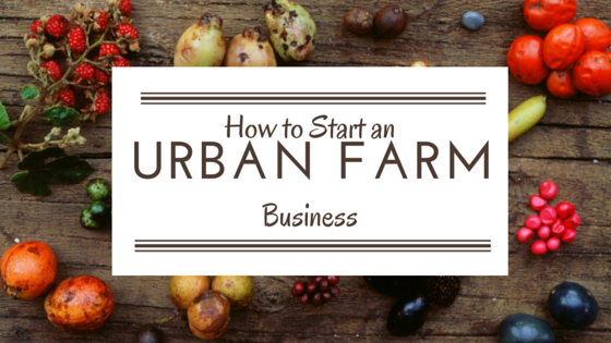 How to start an urban farm business